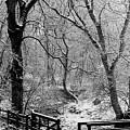 Winter, Ham Burn, Whitley Mill by Iain Duncan