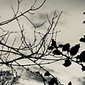 Winter Holly Tree Silvertone by Itsonlythemoon