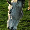 Winter Horse 4 by Marcin Rogozinski