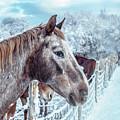 Winter Horses by Steven Milner