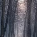 Winter Hush by Rob Blair