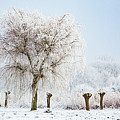 Winter In Holland by Casper Cammeraat