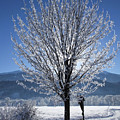 Winter In Innsbruck by Hartmut Knisel