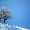 Winter In Switzerland - Snow And Sunshine by Susanne Van Hulst