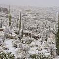 Winter In The Desert by Sandra Bronstein
