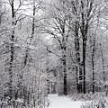 Winter In The Forest by Gabriela Insuratelu