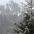 Winter In The Forest by LKB Art and Photography