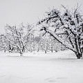 Winter In The Orchard by Steph Gabler