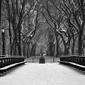 Winter In The Park by John Rizzitelli