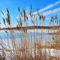 Winter In The Salt Marsh by Catherine Reusch Daley