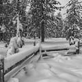 Winter In The Sierra by Jonathan Nguyen
