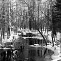 Winter In The Woods by Scott Welton