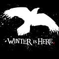 Winter Is Here - Large Raven by Edward Draganski
