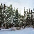 Winter by Jonathan Nguyen