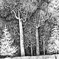 Winter Lace by Anna  Duyunova
