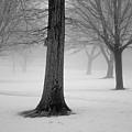 Winter Landscape II by Dave Gordon
