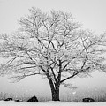 Winter Landscape Vi Bw by David Gordon