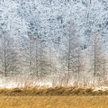 Winter Layers by Patti Deters