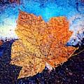 Winter Leaf by Ydania Ogando