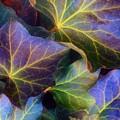 Winter Leaves by Tara Turner