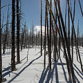 Winter Light by Jack Bell