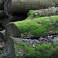 Winter Log Mossy Patterns by Valia Bradshaw