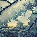 Winter Magic by Colette V Hera Guggenheim