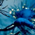 Winter Magic by Susanne Van Hulst
