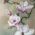 Winter Magnolia Blooms by Pamela Long