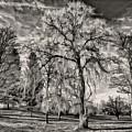 Winter Marches On Polaroid by Steve Harrington