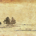 Winter Marsh by Douglas W Bradshaw