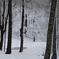 Winter by Mary Halpin
