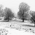 Winter Memories by Marius Cinteza
