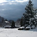 Winter by Mikki Cucuzzo