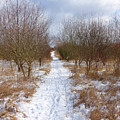 Winter by Miroslav Nemecek
