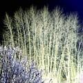 Winter Moonlight by Will Borden