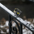 Winter Morning by Teresa Herlinger