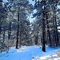 Winter Morning by Walter Chamberlain