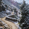 Winter Mountain Path by Yuka Ogava