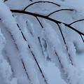 Winter Music by Deborah Hughes