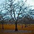 Winter Orchard by Derek Selander
