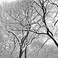 Winter Panorama  by Robert Ullmann