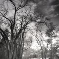 Winter Pathways by Tara Turner