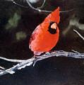 Winter Perch by Jim Bob Swafford