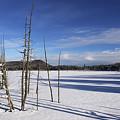 Winter Pond by Bill Mason