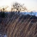 Winter Prairie Grass At Dusk by David Prahl