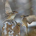 Winter Quarrel by Mircea Costina Photography