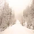 Winter Quiet by Tara Turner