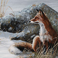 Winter Respite by Dreyer Wildlife Print Collections