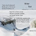 Winter Rest by Ann Horn